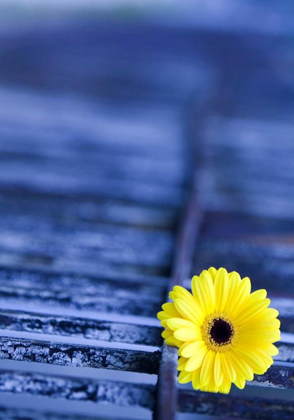Fleur de l'espoir !