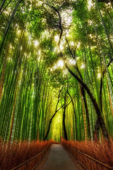 Promenade dans une forêt de bambous