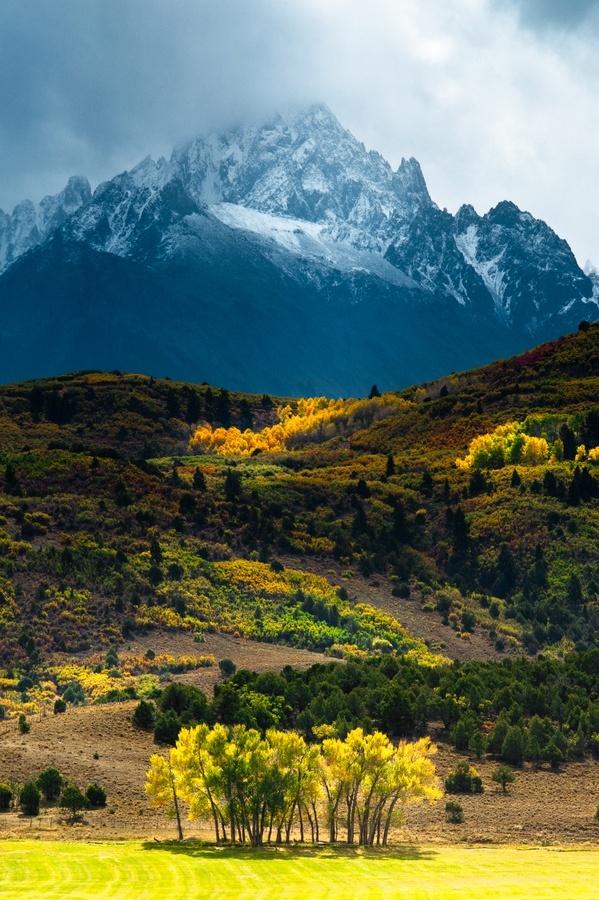 montagne-bosquet